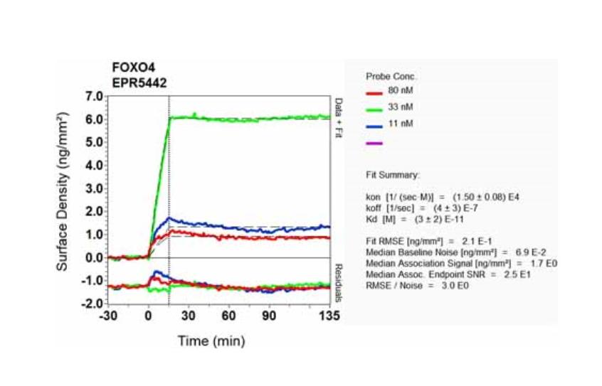 anti-foxo4-afx-antibody