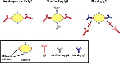 Monitoring Allergen Immunotherapy Effects by Microarray.
